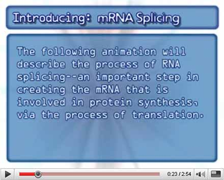 mRNA Splicing Video