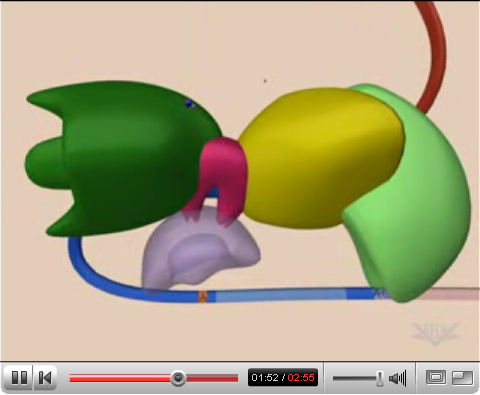 Play the splicing video on YouTube